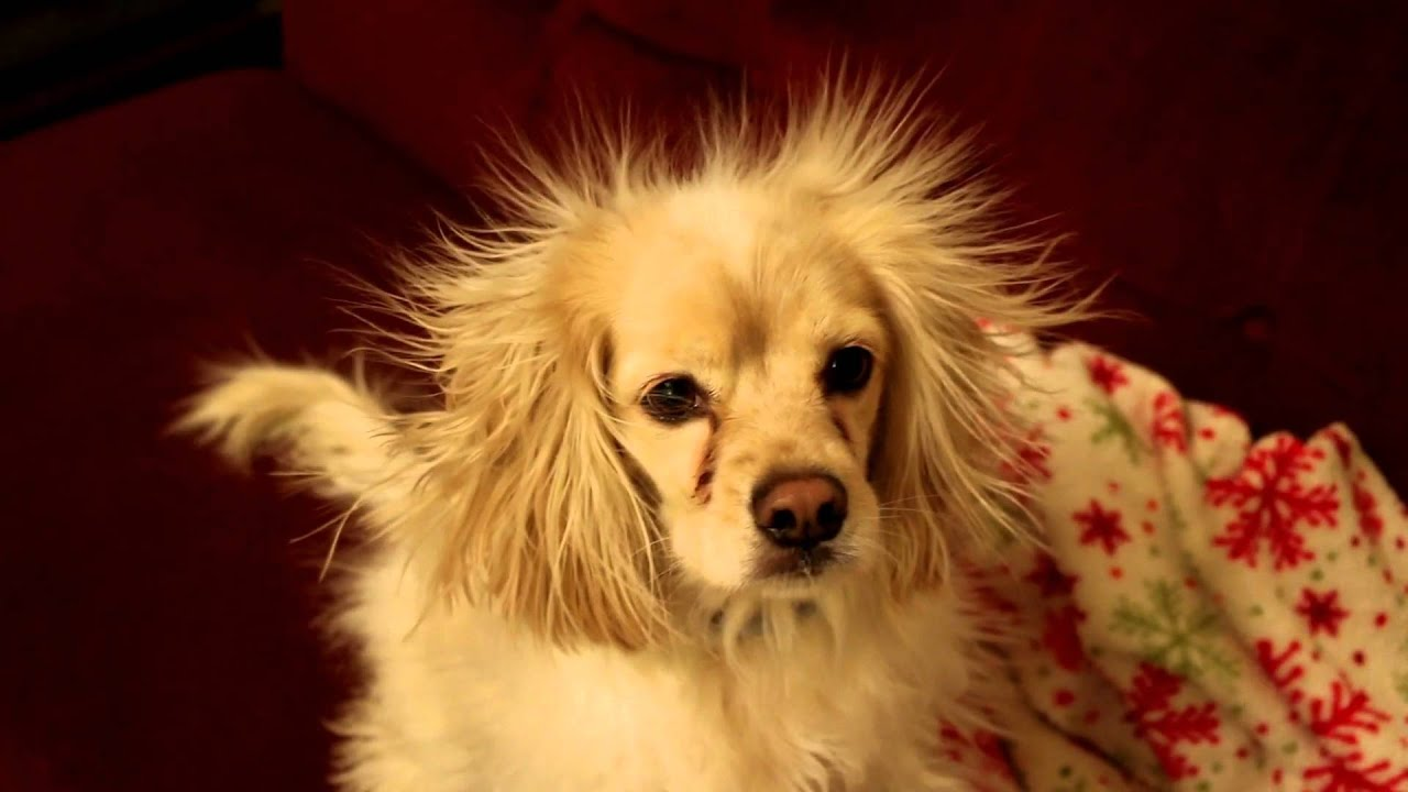 Static dog in hd youtube - Remove static energy ...