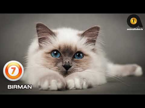 TOP 10 BEAUTIFUL CAT BREEDS (2019)