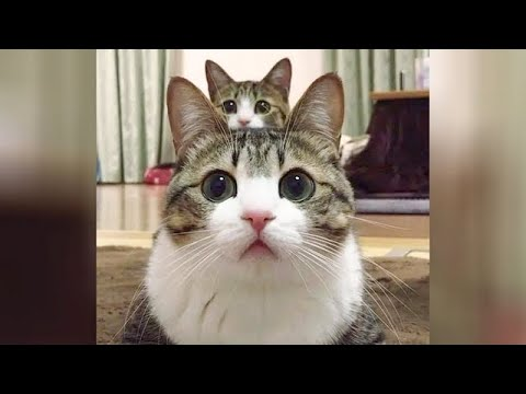 INSANELY FUNNY CAT MOMENTS 😹
