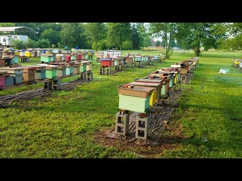 Is Honey Bee Nectar Flow On? Here Is How To Tell