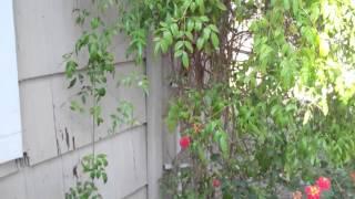 Sacramento Home Inspection Siding Problem