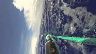 Saving Humpback Whale from Entanglement
