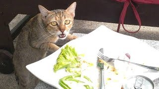 I PROMISE that you will LAUGH YOUR LUNGS OUT while watching this - Funny CAT compilation thumbnail