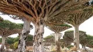 Natural wonders - Socotra (the most alien-looking place on Earth)
