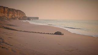 Le surprenant littoral du Sultanat d'Oman - life