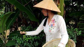 Hái lá Sầu Đâu trộn gỏi Sầu Đâu với Khô Cá Lóc tại nhà chị Tuyền  | Thôn Nữ Miền Tây