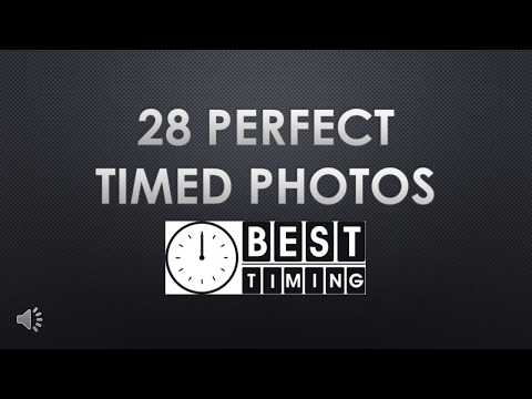 28 Perfect Timed Photos | Best Timing