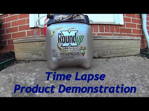 """Round-Up """"Extended Control"""" Weed Killer Product Demonstration - Time Lapse"""