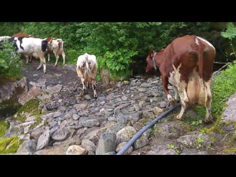 Small farming in Scandinavia part 1