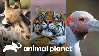¡3 animales con mucha personalidad! | Los Irwin | Animal Planet