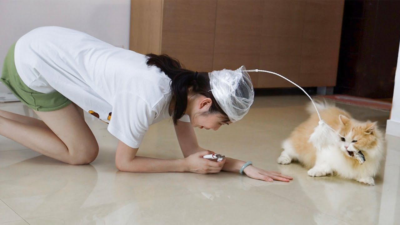 【花花与三猫】用小鱼干骗猫剪指甲,猫会上当吗?