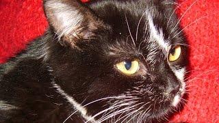 Глисты у кошек и собак. Дипилидиоз. Огуречный цепень(Глисты у кошек встречаются часто, особенно если есть блохи, один из видов это огуречный цепень или дипилиди..., 2015-08-15T04:32:25.000Z)