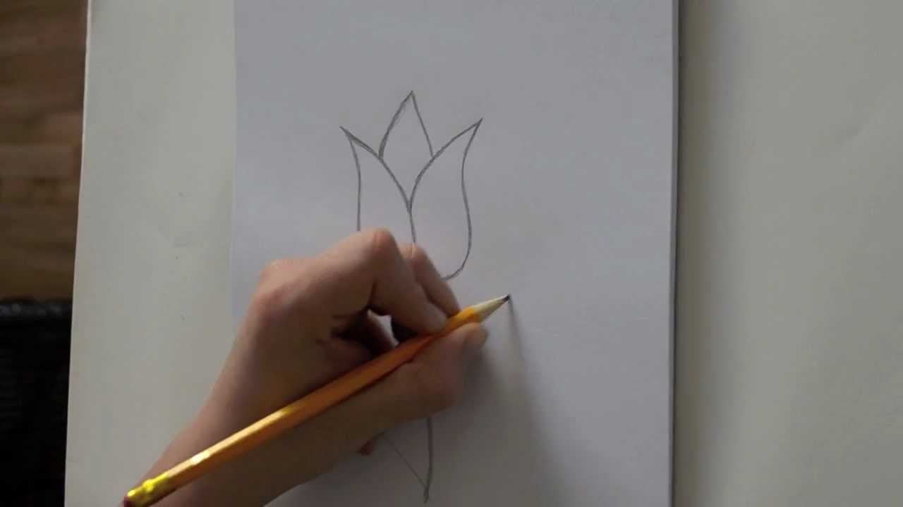 Uncategorized How To Draw A Tulip Easy how to draw a tulip youtube