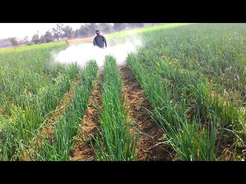 HIGH pressure pump, Agriculture Sprayer | ONION PRODUCTION