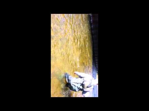 Trout fishing Saratoga springs ny