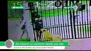 Villa Castells: así se robaron un cachorro a través de una reja