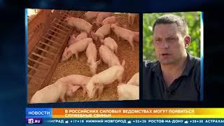 РЕН ТВ оценил идею замены служебных собак поросятами