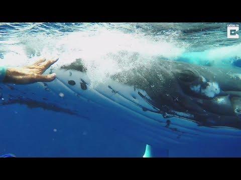 Кит спас девушку-водолаза от акулы