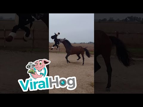 Bored Horse Introduced To A New Best Friend Can't Hide How Thrilled He Is