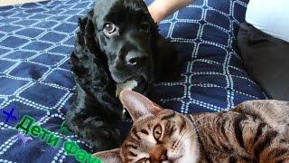 Можно ли стричь собак?  Как помочь собаке в жару?