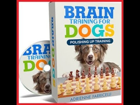 Features Video Brain Training 4 Dogs  Obedience Training Commands