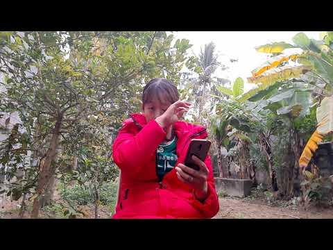 Vườn Chuối Cho Thu Hoạch Trăm Triệu Hàng Năm Là Đây