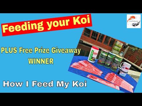 Feeding Your Koi PLUS **Free Prize** Giveaway Winner - How I Feed My Koi