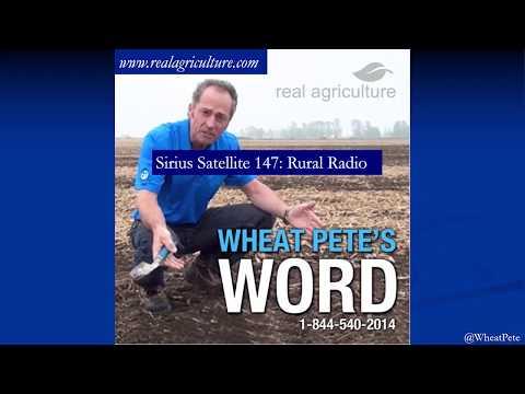 Maximum Wheat! High-yield