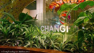 4K | Singapore Changi | The Layover