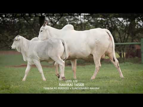 LOTE 129   CSCN 14568