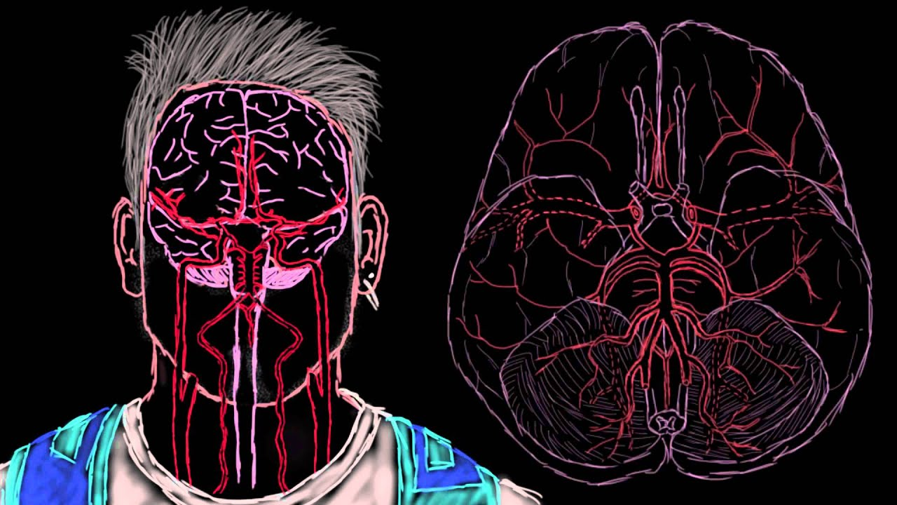 Khan Academy Cerebral Blood Supply Part 1