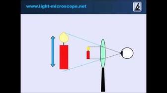 Erklärung: Wie funktioniert eine Lupe?