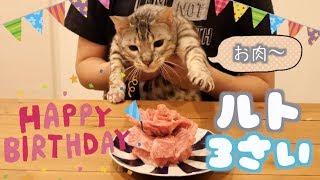ルトの歳の誕生日は肉ケーキでお祝い♡