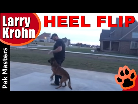 Teaching the Heel Flip with Pak Masters Dog Training