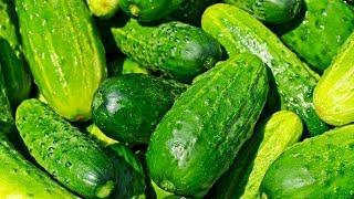 Günde Bir Salatalık Yemeye Başlayın, Vücudunuza Neler Olduğunu Görün