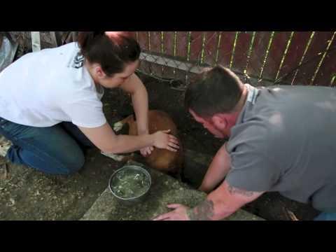 Detroit Dog Rescue Honey Bee's Rescue