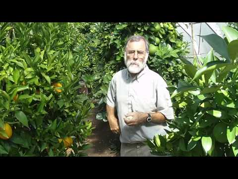 Bob Duncan: growing oranges in Canada