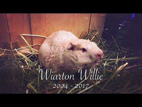 In Memoriam: Farewell Wiarton Willie
