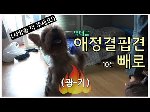 역대급 애정결핍견 '빼로' 그의 사연은?!_The story of 'Pero', a puppy begging for affection