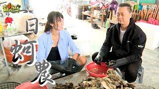 《一日系列第四十八集》是男人都需要~邰智源帶你來抓牡蠣囉!-一日蚵農 One Day Oyster Farmer
