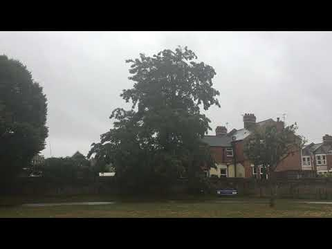 Black Locust - Tree - September 2018