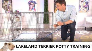 Lakeland Terrier Potty Training from WorldFamous Dog Trainer Zak George   Lakeland Terrier Puppy