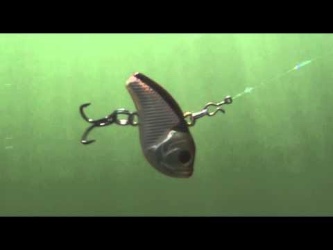 как ловят толстолобика на планктон
