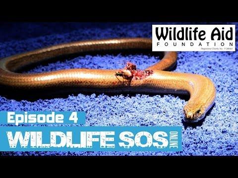 Wildlife SOS Online  Episode 4