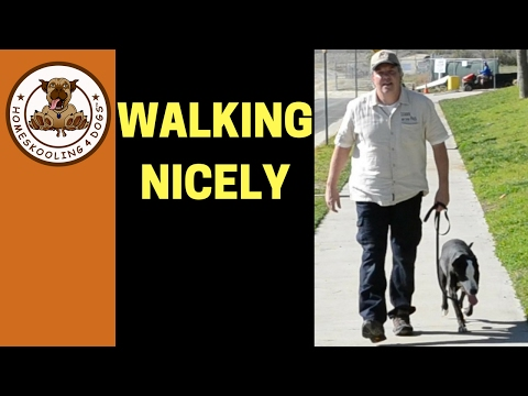Teaching Shelter Dog to Walk on Leash without pulling
