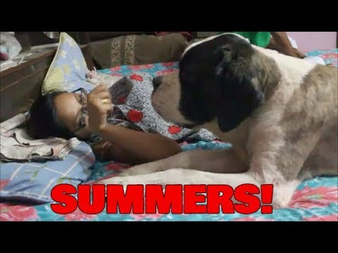 MY PETS IN SUMMER AFTERNOONS | Wildly Indian