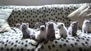 YouTube видео Прикол, умноженный на     котят!!!