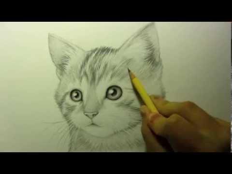 كيفية رسم قطة | عاشقة الرسم ـ How to draw a cat | Lover Drawing