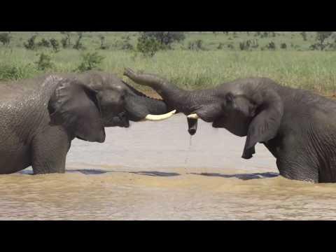 Lower Sabie Sightings - March 2017 - Kruger National Park