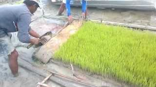 Rice Transplanter Testing in Calapan